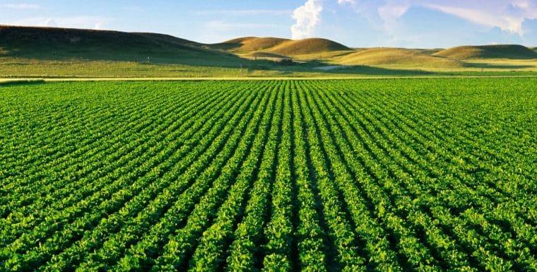Regulamentação para venda de agrotóxicos