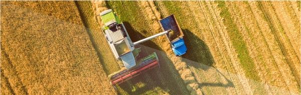 Eficiência Agronômica de fertilizante a base de Enxofre e Potássio (Sulfeto) SK